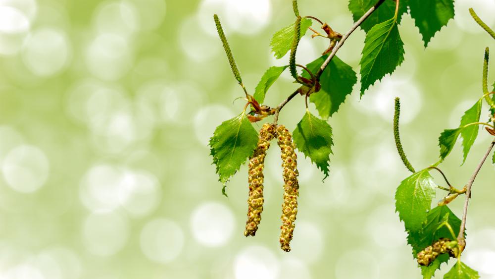 la naturopathie et les allergies saisonnières