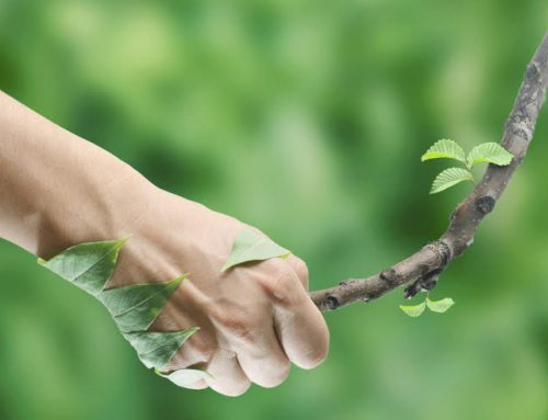 Les bienfaits de la naturopathie