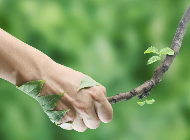 Bienfaits de la nature en naturopathie