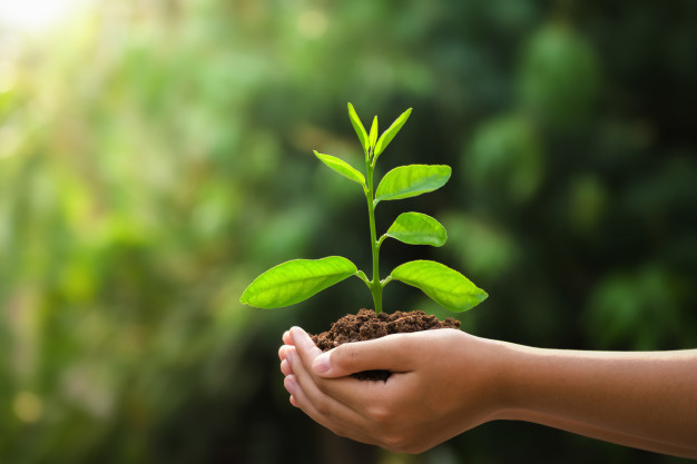 desir d'enfant et grossesse en naturopathie