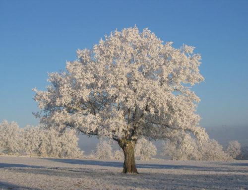 NATUROPATHIE : C'est l'hiver, profitons-en !
