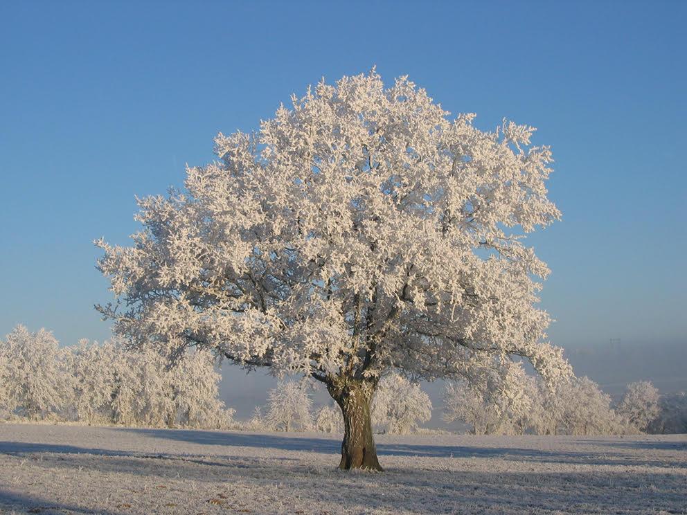 pourvoir d'un arbre